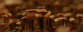 Bokeh Mushrooms